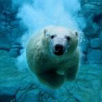 La disminución de Hielo en el Ártico y el Cambio Climático