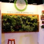 Cuadro de Plantas Vivas – Arte Vegetal