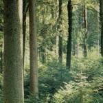 Primer proyecto en el país de captura de dióxido de carbono