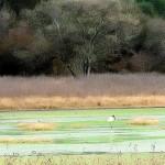 Chaco: Expropiación de estancia para crear Reserva Natural en El Impenetrable