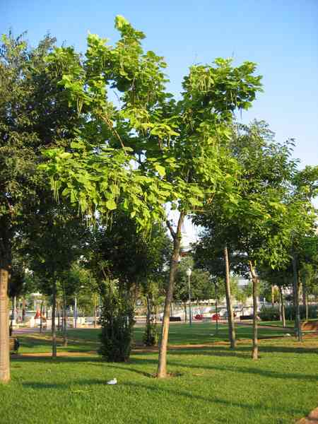Los arboles pulmones del planeta espacio sustentable - Arboles pequenos para jardin ...