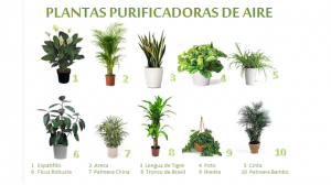 10 Plantas Purificadoras