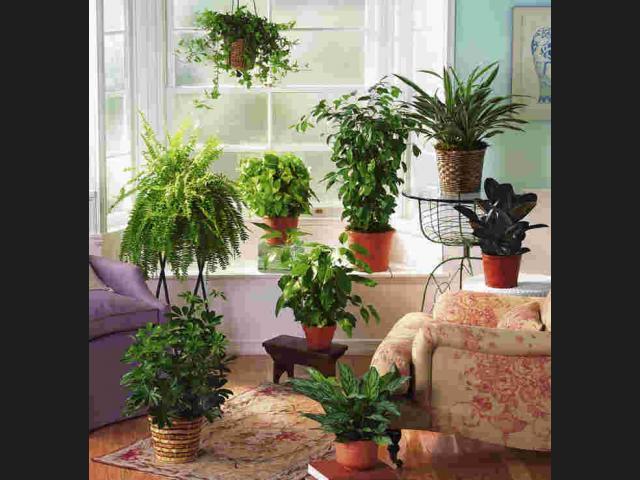 Hogar Sustentable: Plantas purificadoras de aire