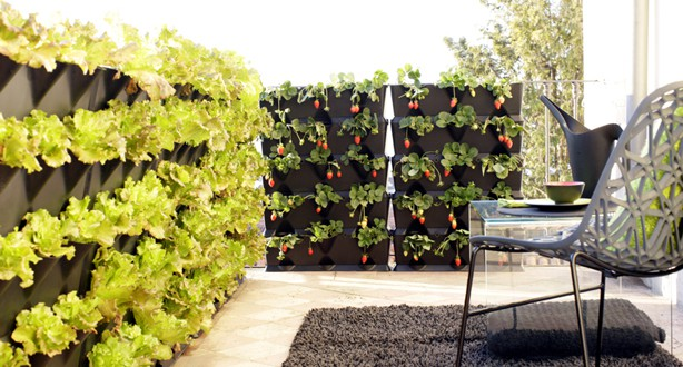 Jardines verticales de plantas comestibles en tu cocina for Plantas utilizadas en jardines verticales