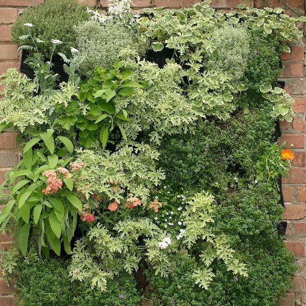 Jardines verticales de plantas comestibles en tu cocina for Plantas verticales de interior