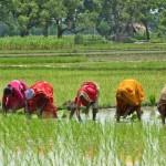 Vandana  Shiva, un ejemplo de lucha sustentable