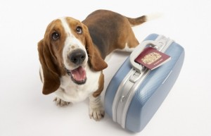 Como llevar a tu perro al trabajo