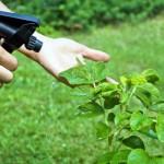 El mantenimiento orgánico de la huerta