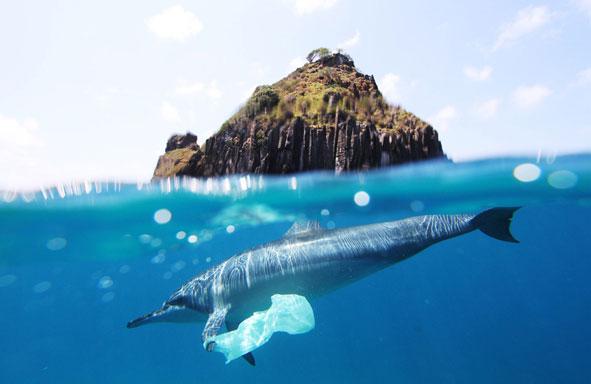 Delfín, contaminación marina, océanos