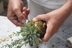 Podés usar un piolín biodegradable para tu kokedama