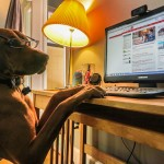 Oficinas Sustentables: ¿Puedo llevar a mi mascota?