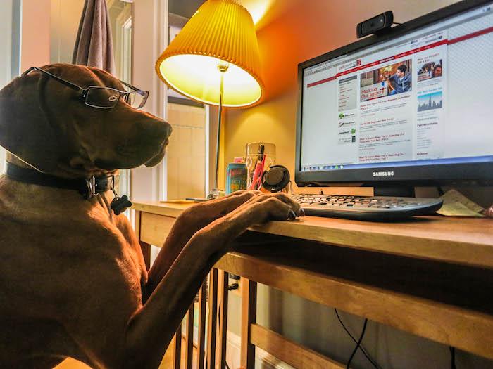 Mascotas en Oficinas