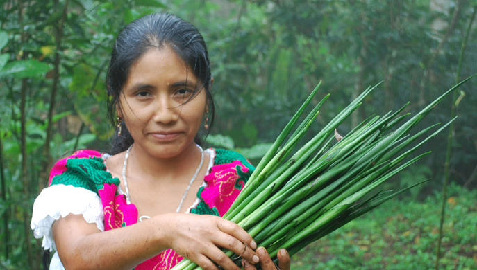 Convocatorias Ambientales 2014: InterAmerican Foundation