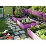 Mantenimiento orgánico de la Huerta – Sanidad y preparados caseros