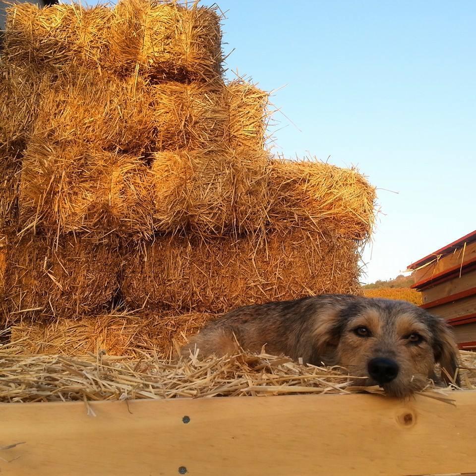 Su mascota descansa entre los materiales