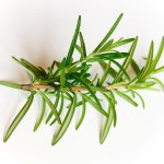 Huerta Orgánica: ¿ Cómo reproducir plantas aromáticas?