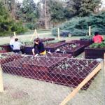 Calendarios de Siembra: ¿ Como Planificar la Huerta?