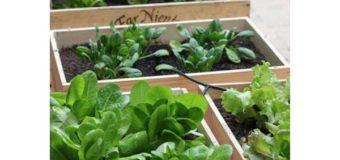 Cómo hacer una huerta en cajones de verduras