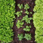 RSE: Sustentabilidad y Responsabilidad Social Corporativa