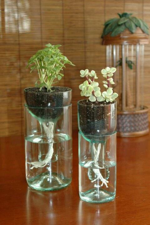 Macetas con frascos de vidrio reciclados