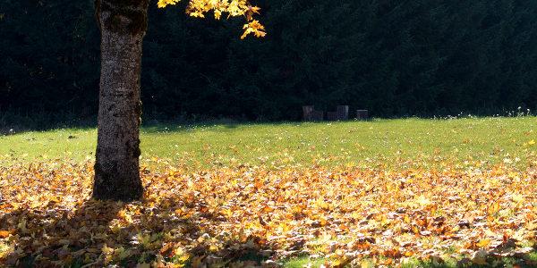 Sombra en tu Jardín Sustentable