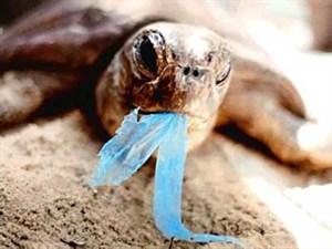 Tortugas marinas mueren por consumir restos de plástico