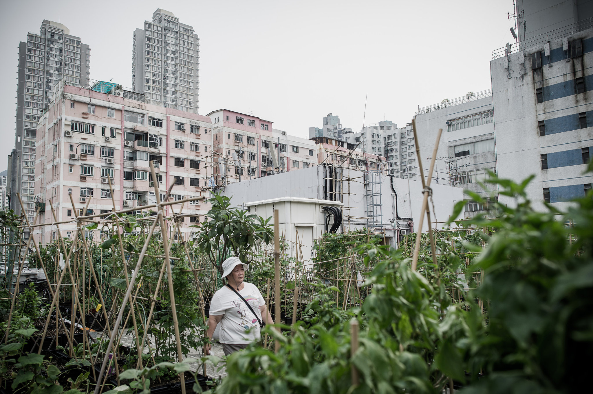 Huertas Urbanas en Hong Kong