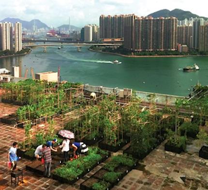Huertas comunitarias en Hong Kong