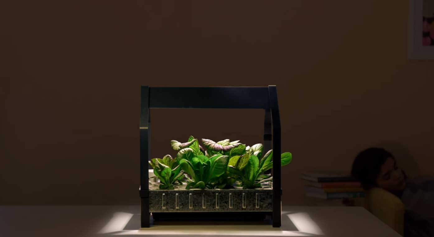 Por medio de un Kit, podemos cultivar nuestras verduras.