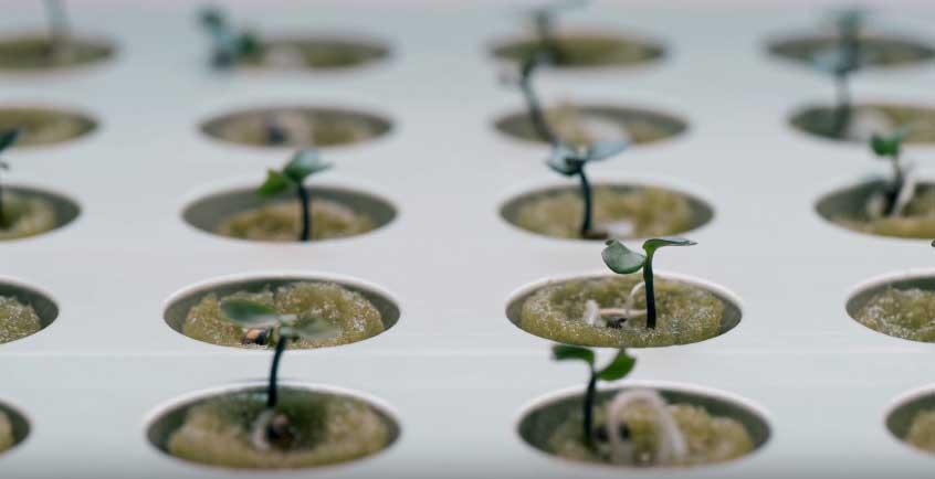 Un Jardín Hidropónico para espacios reducidos es posible a través del Kit de jardinería que propone IKEA para cultivar nuestras propias verduras.