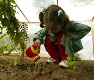 Ver el crecimiento de las semillas que plantamos junto a los niños.