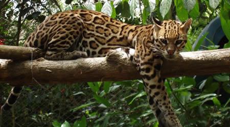 Campeche: Reserva de la Biosfera en Mexico