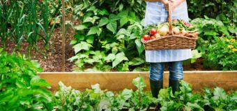 Cuándo cosechar los cultivos de tu huerta