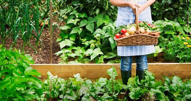 Huerta urbana: ¿ Cuando cosechar?