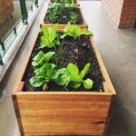 Conocé qué vegetales podemos sembrar en pleno verano!