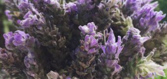 Plantas con propiedades medicinales. ¡ Conocé cuáles son!