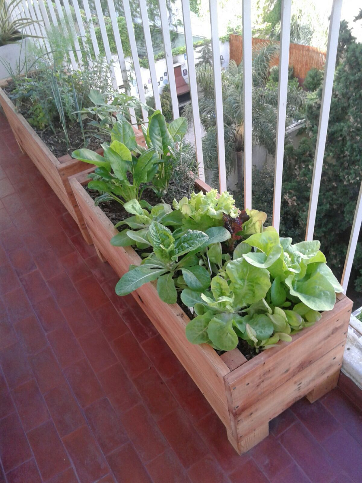 Huerta en el balcón con cajones de madera