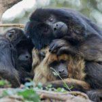 Bioparque Temaikén: Naturaleza viva