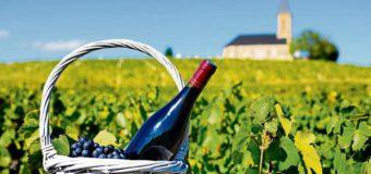 El vino orgánico llegó para quedarse