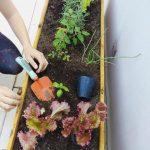 Lombriz roja californiana, la diva del compost!